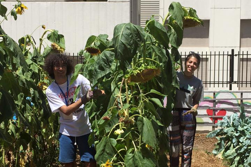 Cyprus students at the GW GroW Garden